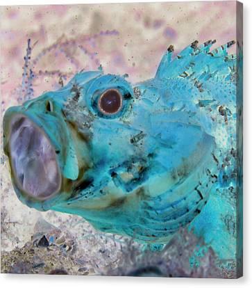 Sea Anenome Canvas Print - Nautical Beach And Fish #1 by Debra and Dave Vanderlaan