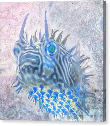 Sea Anenome Canvas Print - Nautical Beach And Fish #12 by Debra and Dave Vanderlaan