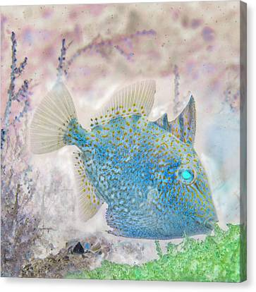 Sea Anenome Canvas Print - Nautical Beach And Fish #2 by Debra and Dave Vanderlaan