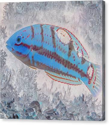 Sea Anenome Canvas Print - Nautical Beach And Fish #7 by Debra and Dave Vanderlaan