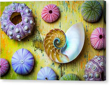 Nautilus And Urchins Canvas Print