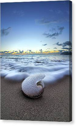 Nautilus By Nature Canvas Print by Sean Davey