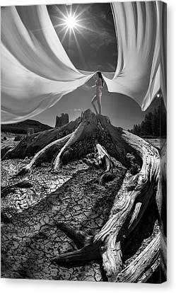Canvas Print featuring the photograph Nautilus by Dario Infini