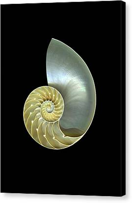 Nautilus Nr.1 Canvas Print by Christian Slanec