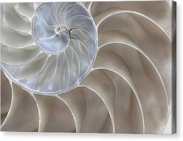 Nautilus Shell II Canvas Print by John Hix
