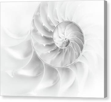 Nautilus Shell In High Key Canvas Print by Tom Mc Nemar