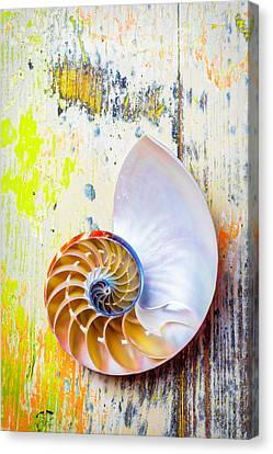 Nautilus Shell On Old Board Canvas Print