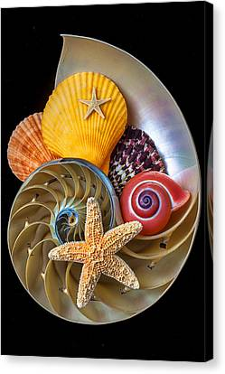 Nautilus With Sea Shells Canvas Print by Garry Gay