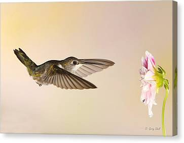 Canvas Print featuring the photograph Nectar Seeking Missile by Gerry Sibell