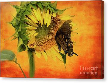 Nectar Time Canvas Print