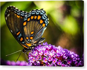 Butterfly Beauty  Canvas Print by Bruce Pritchett