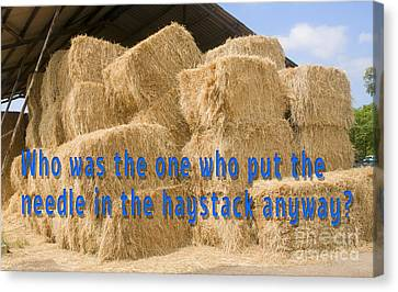 Needle In The Haystack Anyway? Canvas Print by Humorous Quotes