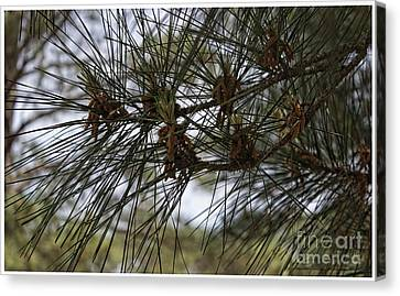 Needles Attached Canvas Print