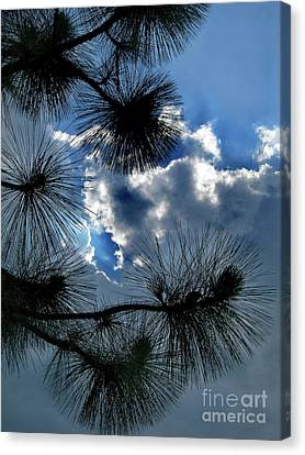 Needles In The Clouds Canvas Print