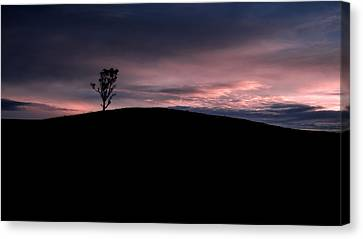 Negative Paradise Tree Canvas Print by Claire Walsh