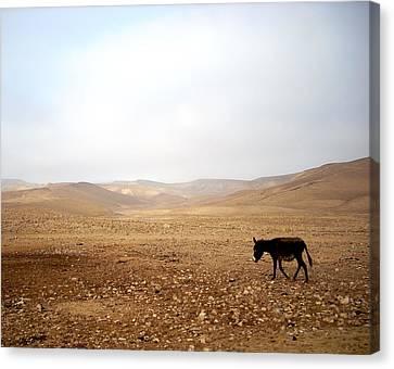 Negev Donkey Canvas Print by Rachel Figueroa