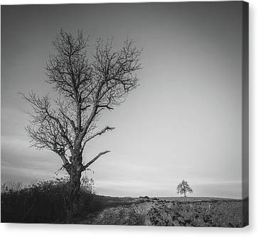 Canvas Print featuring the photograph Neighbours by Davorin Mance