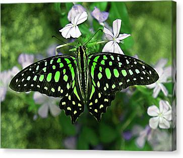 Neon --- Tailed Jay Butterfly Canvas Print