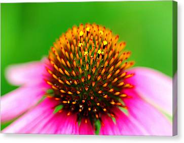 Neon Coneflower Canvas Print by Debbie Oppermann