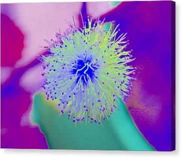 Neon Green Puff Explosion Canvas Print