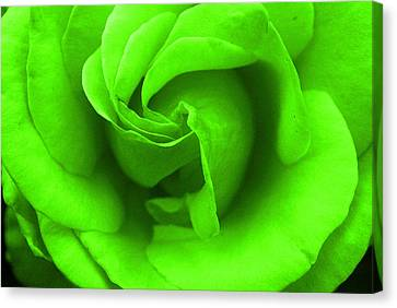 Neon Green Rose Canvas Print