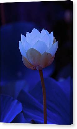 Canvas Print featuring the photograph Neon Lotus by Carolyn Dalessandro