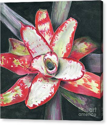 Neoregelia 'blastoff' Canvas Print by Penrith Goff