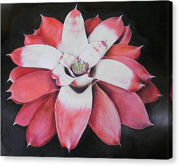 Neoregelia Madam President Canvas Print by Penrith Goff