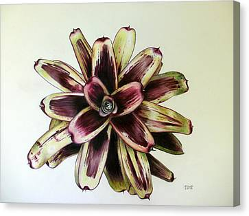 Neoregelia Painted Delight Canvas Print by Penrith Goff