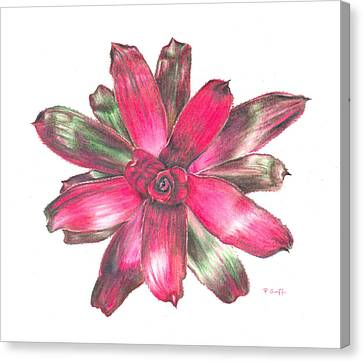 Neoregelia Puppy Love Canvas Print by Penrith Goff