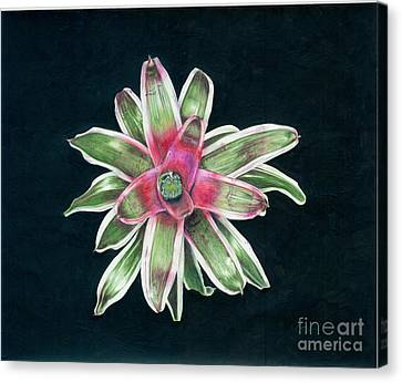 Neoregelia Terrie Bert Canvas Print by Penrith Goff