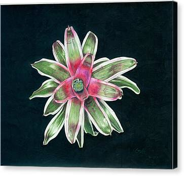 Neoregelia Terry Bert Canvas Print by Penrith Goff