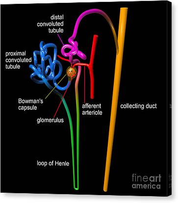 Canvas Print featuring the digital art Nephron Black With White Labels by Russell Kightley