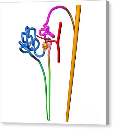 Canvas Print featuring the digital art Nephron White by Russell Kightley