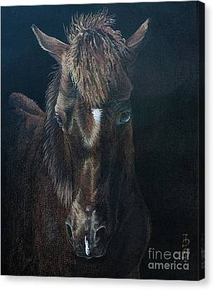 Nervous Colt  Milltown Fair Canvas Print by Pauline Sharp