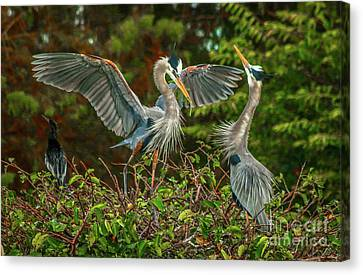 Nest Landing Canvas Print by Tom Claud