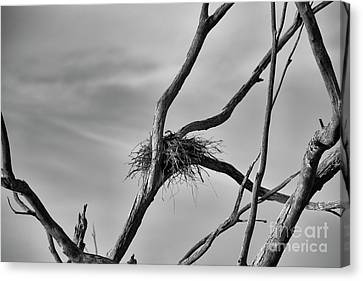 Canvas Print featuring the photograph Nested by Douglas Barnard