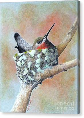 Nesting Anna Canvas Print by Phyllis Howard