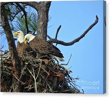 Nesting Bald Eagles 2016 Canvas Print by Deborah Benoit