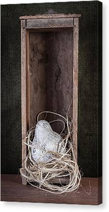 Nesting Bird Still Life Canvas Print by Tom Mc Nemar
