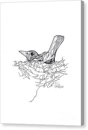 Canvas Print featuring the drawing Nesting by Michael Ciccotello