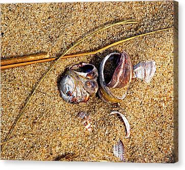 Nestled In The Sand Canvas Print by Lynda Lehmann