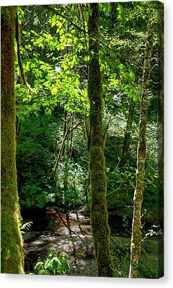 Nestucca River 3039 12x18 Canvas Print by Jerry Sodorff