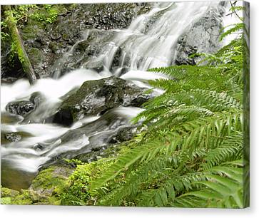 Nestucca River Detail Canvas Print