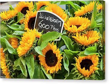 Netherlands Sunflowers Canvas Print