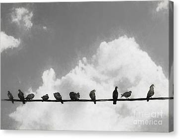 Network Of The Bird Line  Canvas Print by Jorgo Photography - Wall Art Gallery