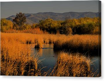 Nevada Marshlands At Sunset Canvas Print