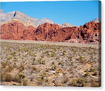 Nevada's Red Rocks Canvas Print by Rae Tucker