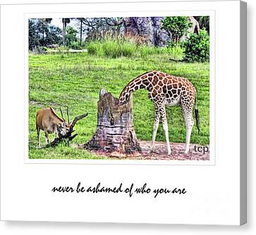 Canvas Print featuring the photograph Never Be Ashamed by Traci Cottingham