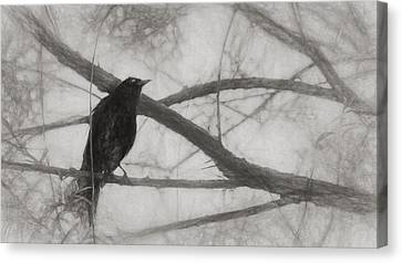 Nevermore Canvas Print by Melinda Wolverson